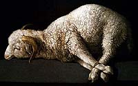 'Agnus Dei' (1635-40), Francisco de Zurburan (1598-1664), oil on canvas 38 x 62 cm., Museo Nacional del Prado, Madrid